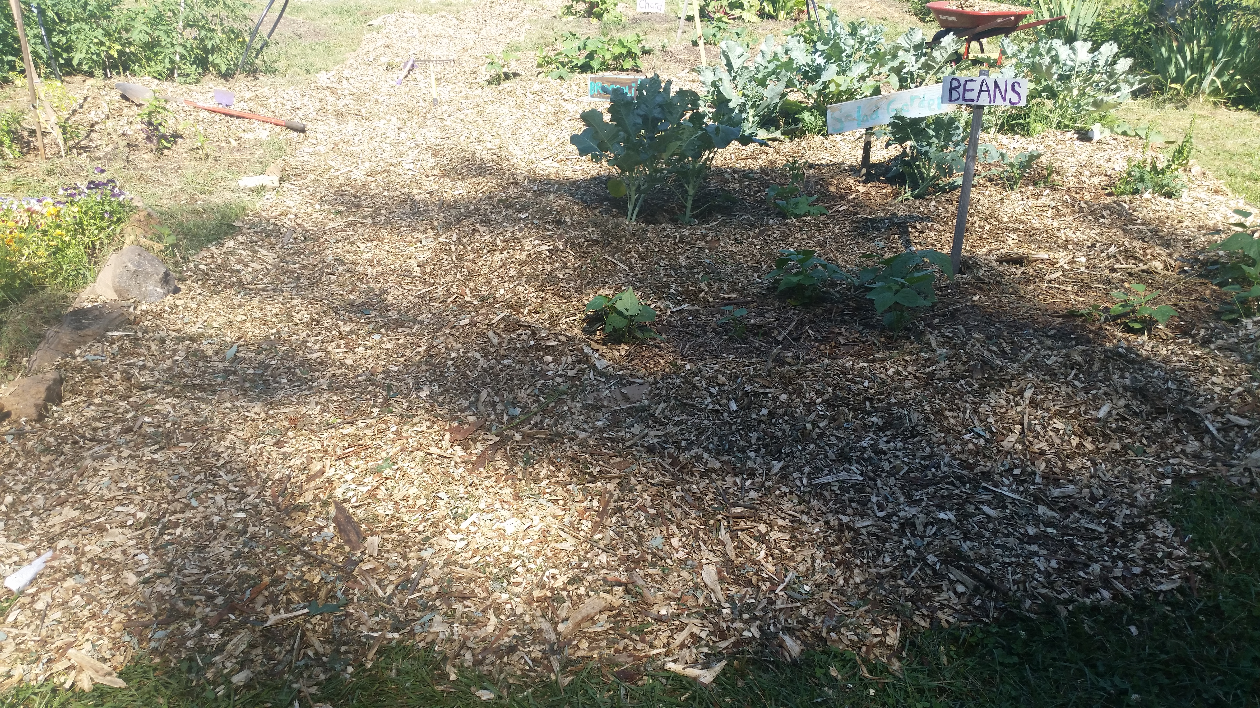 Freshly mulched paths!